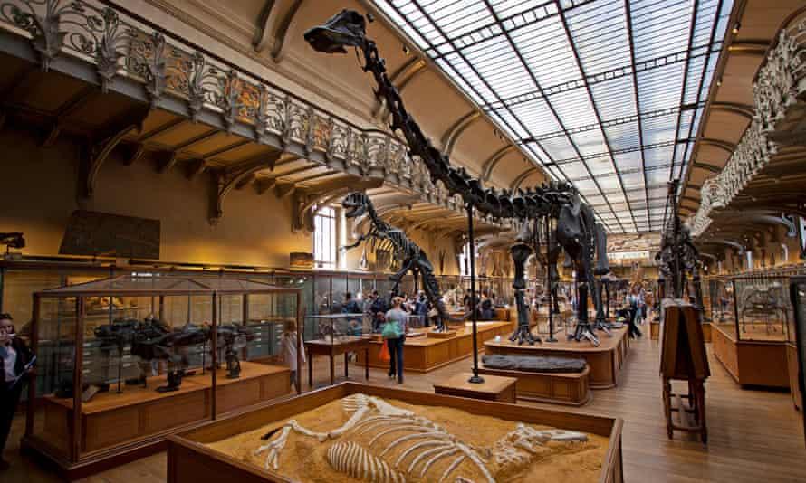 Galeries d'Anatomie comparee et de Paleontologie. Gallery Paleontology, Natural History Museum, Paris