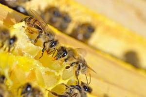 chemical test for honey