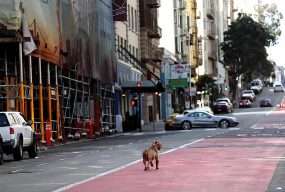 A dog cruises empty Geary Boulevard in San Francisco.