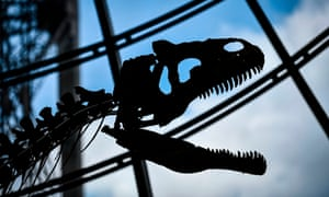 The skeleton of the dinosaur on display on the first floor of the Eiffel Tower
