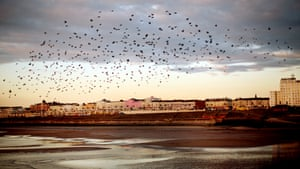 A flock of birds in flight over Blackpool beach at sunset