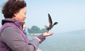 A woman holds out her hand for a Beijing swift.
