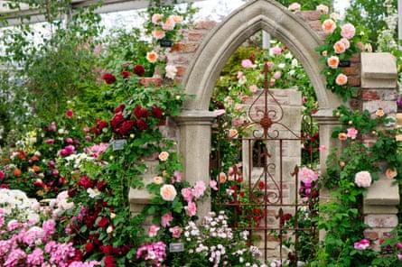 A rose garden at Chelsea flower show