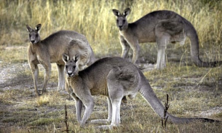 Land of make believe ... how did we ever think kangaroos were real?