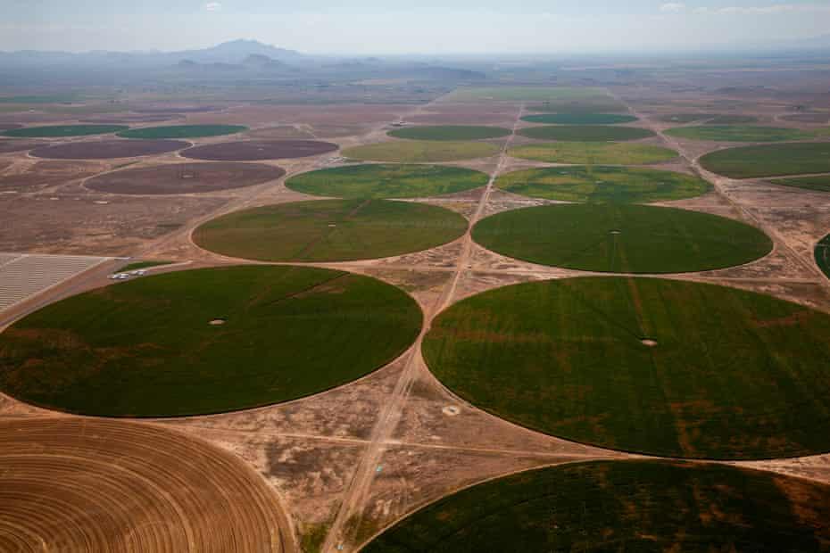 A mega-farm in Arizona