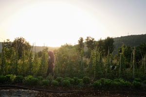 Sabah Taleb surveys crops in Baanoub.