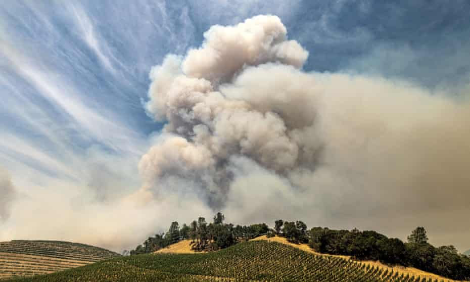 A plume rises over a vineyard in Napa county, California, as the Hennessey fire burns, 18 August 2020.