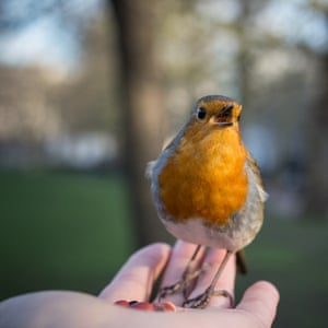 St James's Park, London, and this robin just stood in my hand singing.
