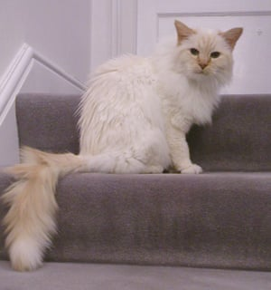 John Gray's cat Julian, who died earlier this year.