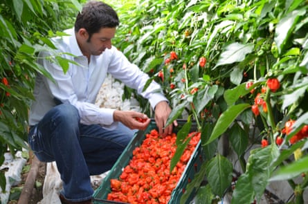 Grower Salvatore Genovese with his Komodo Dragon chilli peppers