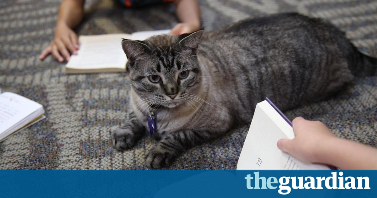 letter format examples browser the library cat escapes eviction amid 22833 | 2550