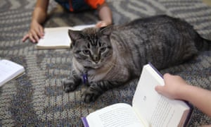 Browser the cat sits among a group of children being read to in the city's public library on Thursday.