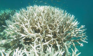 bleaching damage on the corals of the Great Barrier Reef