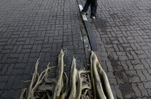 Tree roots forcing their way through the cracks of a pathway in the Ratchaburi district of Bangkok, Thailand