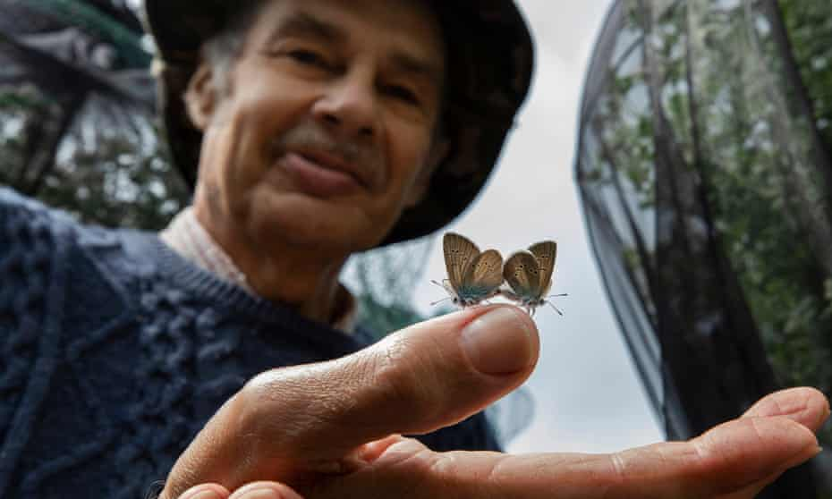 Butterfly breeder Martin White with one of his pairs of mazarine blues.