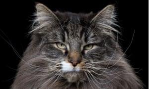 Wise cat.
