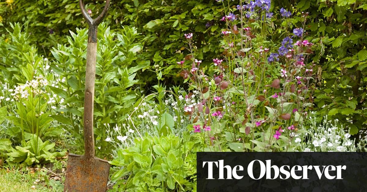 Ye olde gardening myths worth ignoring | Life and style | The Guardian