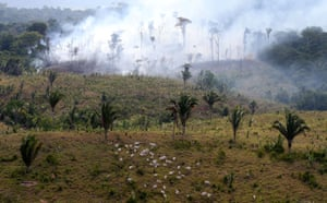 Cattle are seen next to a tract of Amazon jungle burning as it is cleared by farmers in Itaituba, Para, Brazil 26 September 2019.