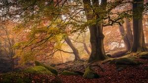 Winner, Trees, Woods & Forests categoryPadley Gorge, Peak District National Park, Derbyshire, England