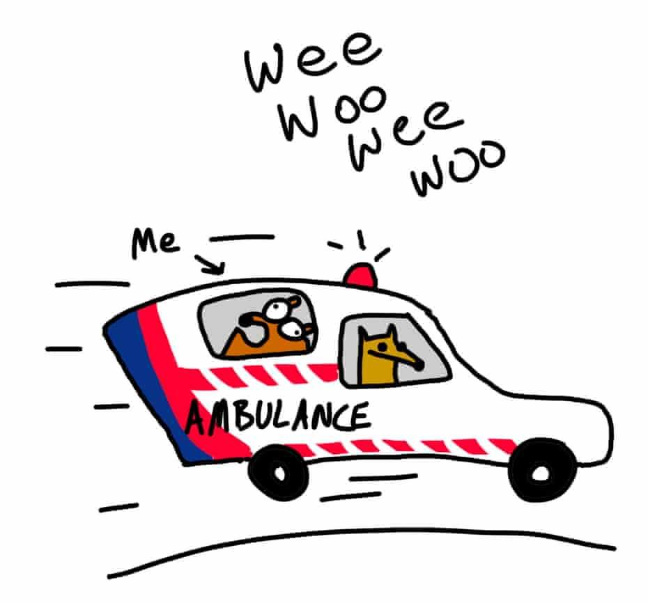 First Dog in ambulance