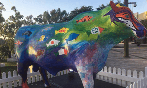 Taiwan flag painted over with blue fish design on bull's front leg in Rockhampton ahead of beef expo