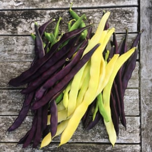 purple and yellow beans