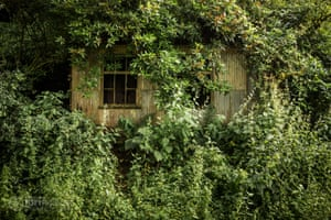 Abandoned waiting room, surrounded by bushes