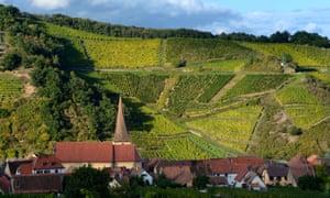 Wine country: the village of Niedermorschwihr in the Alsace.