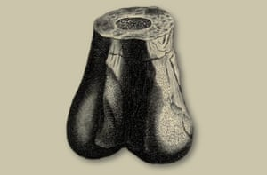 Plot's illustration of a 'giant man or woman bone' thought to be the earliest illustration of a dinosaur fossil. From The Natural History of Oxfordshire.