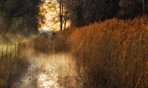 Mist over a fenland habitat at Woodwalton Fen