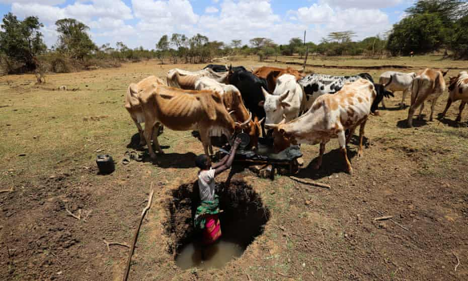 Herder collects water for his cattle