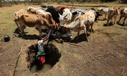 A herder stands in a water hole to collect water for his cattle in Laikipia County, Kenya