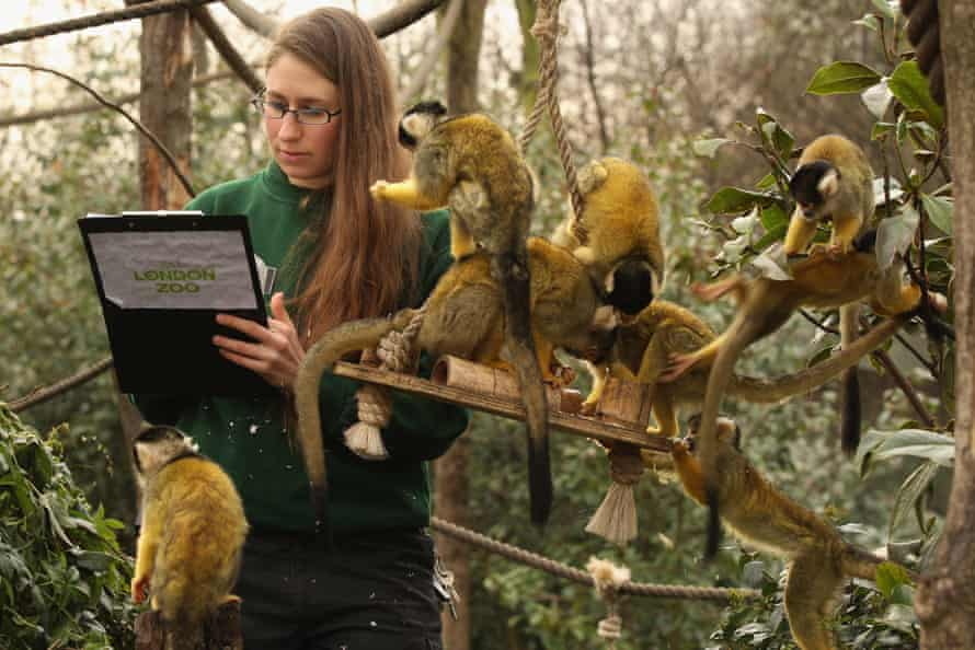 Kate Sanders works with monkeys