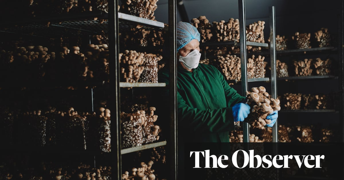 Shiitake happens: vegans fuel boom in exotic mushrooms