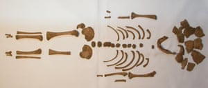 An infant skeleton from a Roman empire cemetery.