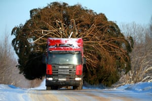 Ivanovo Oblast, RussiaA lorry transports a giant Christmas tree to decorate a city for the festive period