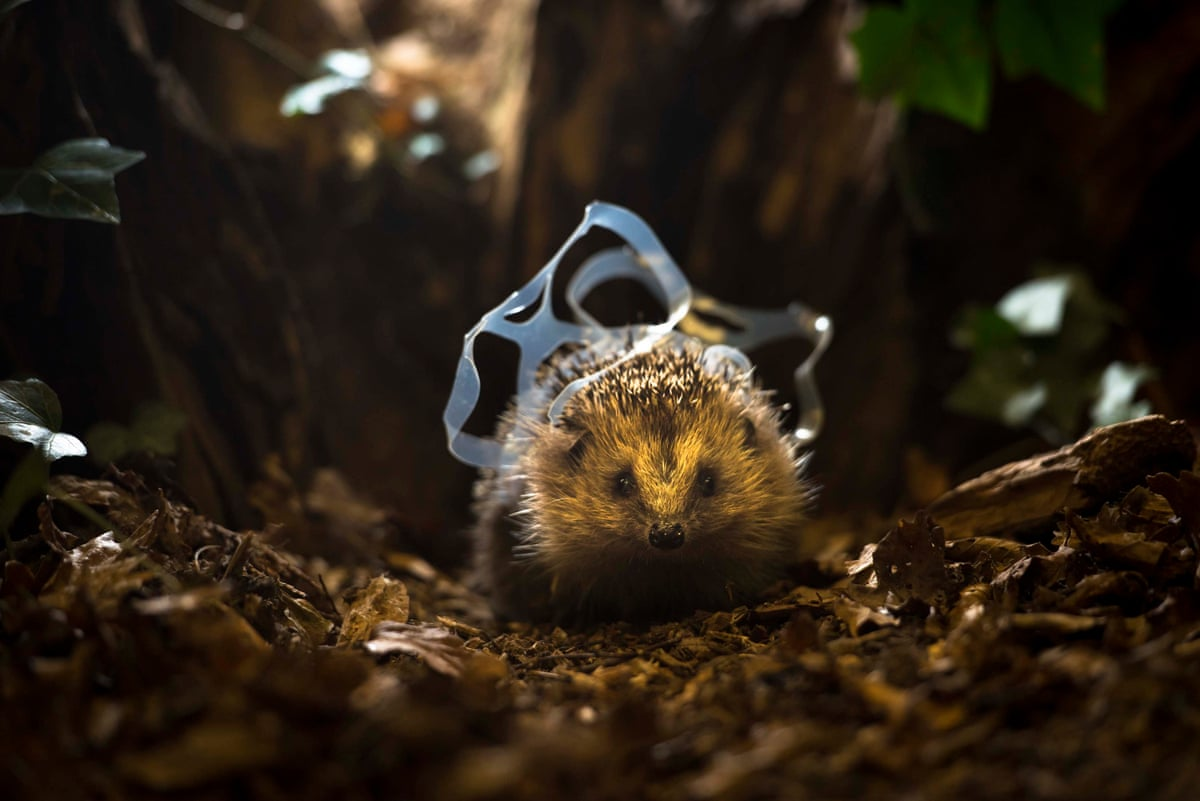 Chris Packham photographs the impact of litter - in pictures | Environment | The Guardian