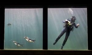 Auarium cleaners at Torquay's Living Coasts Zoo & Aquarium
