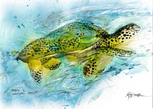 Hawksbill Turtle by Ralph Steadman