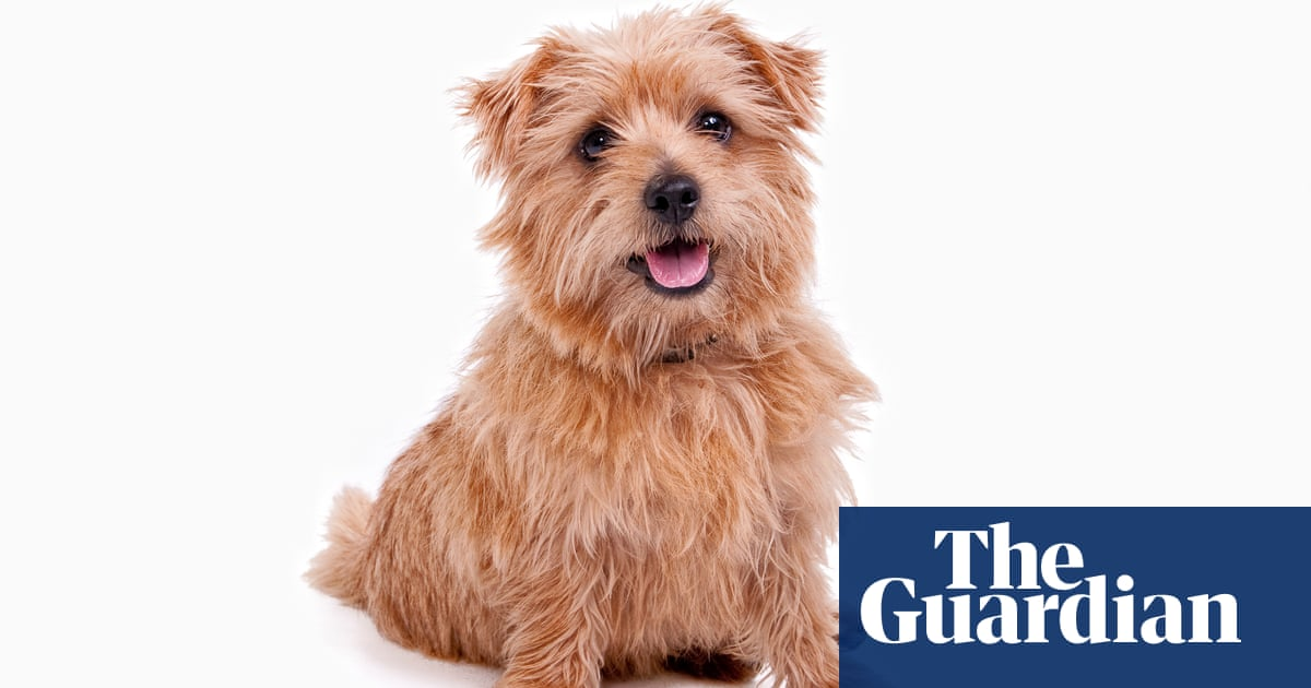 German scientists find fresh evidence of canine intelligence