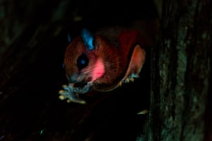 A squirrel glowing under ultraviolet light.