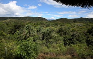 An area of the 'Attalea' tropical dry forest in El Agrado which is part of a programme to recover 11,000 hectares of endangered Colombian dry forest