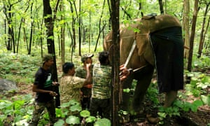 Vets and biologists from Wildlife SOS attach a radio collar to the matriarch of a herd in Mahasamund district, India.