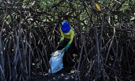 Brazilian fisherwoman Valeria Maria de Alcantara removes spilled crude oil from mangroves, in Cabo de Santo Agostinho, Pernambuco state
