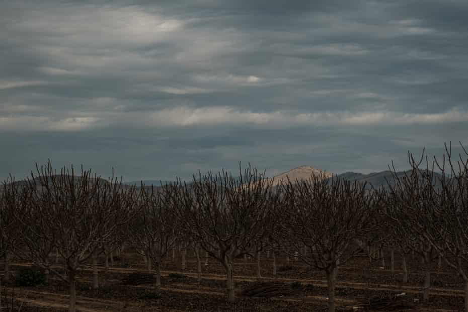 An orchard in East Orosi. Nitrate contamination has made the town's drinking water unsafe.