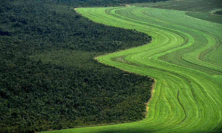 A farmed field alongside native savanna in western Bahia state, Brazil