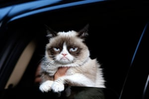 Grumpy Cat wins lifetime achievement award at the Friskies awards in New York in October 2013