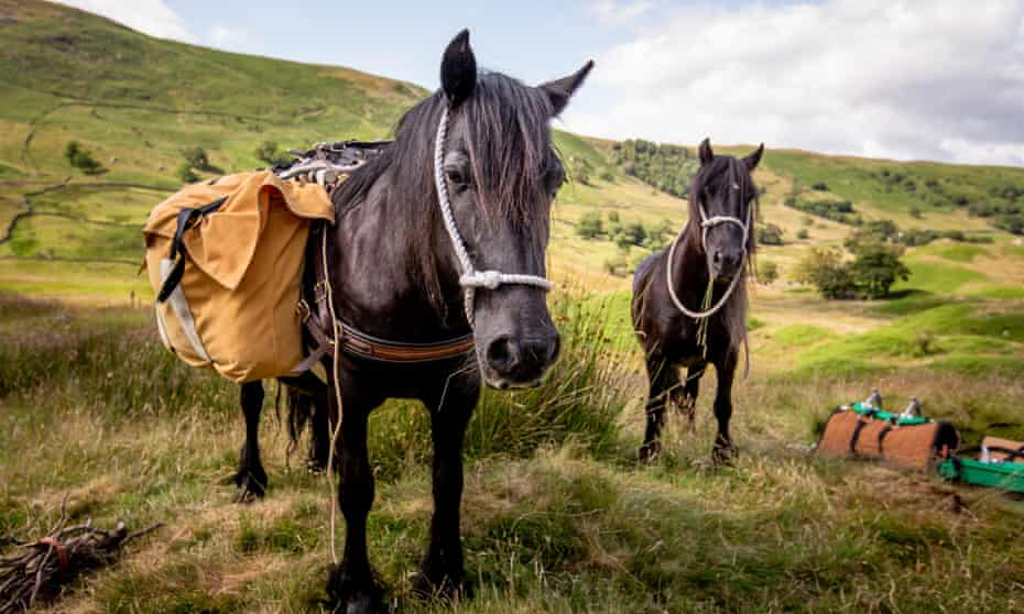 Walking with fallen ponies in Cumbria.