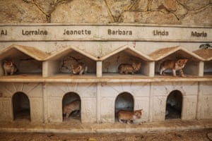 Names are displayed over the new homes of the rescued cats