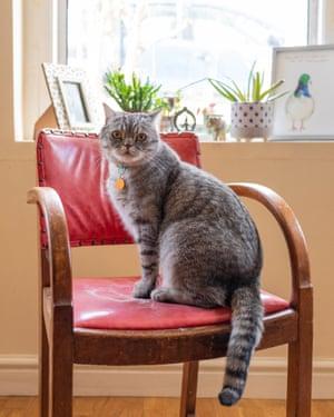 Tom Druker's cat, Itzi
